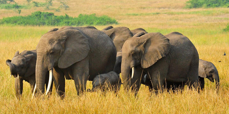 3 Most Popular Tourist Attractions in Uganda | Uganda Info